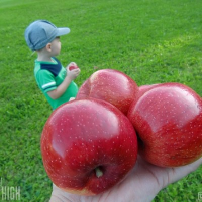 Wordless Wednesday – How About Them Apples?